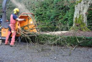 Broyage des branches. Utilisation en paillage.