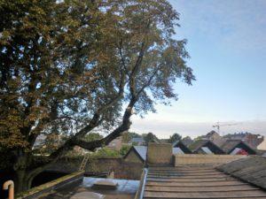 Elagage d'un marronnier pour dégager une toiture