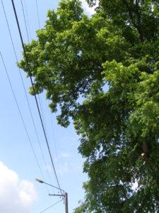 Dégagement de lignes électriques