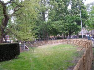 Installation d'une clôture châtaignier robuste pour empêcher l'accès à un vieux Gingko défaillant.
