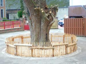 Ce petit périmètre empêchera les enfants d'accéder au tronc creux de ce tilleul dans une cour de récréation.